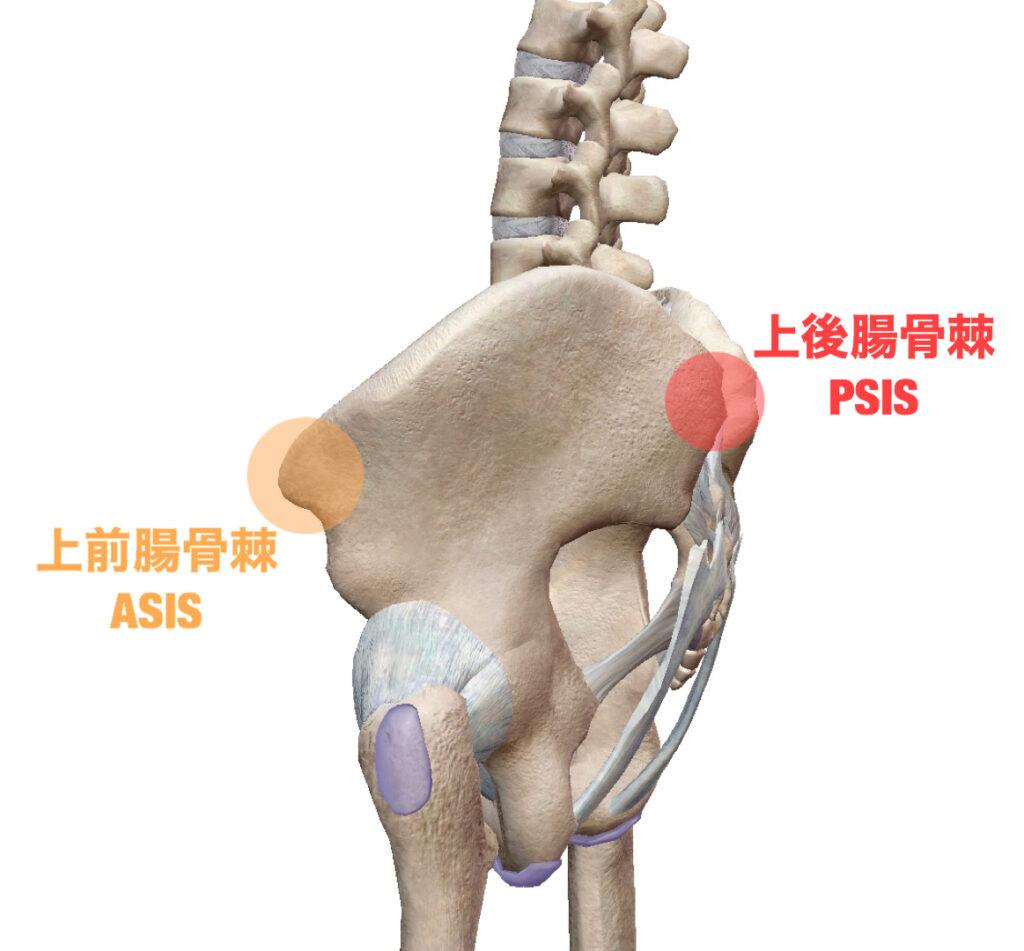 上前腸骨棘と上後腸骨棘
